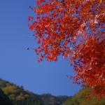五家荘の紅葉状況 6(11/20現在)